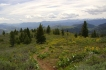 Cruiser trail through sagebrush with Methow Valley in distance.