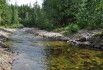 Spawning salmon in Albas Provincial Park.